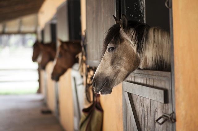 equine flu insurance